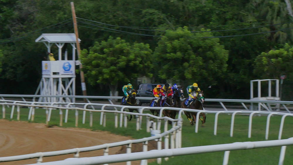 Horse Racing at the Garrison Savannah Racecourse, St Michael, Barbados, West Indies, Caribbean - 844-11091