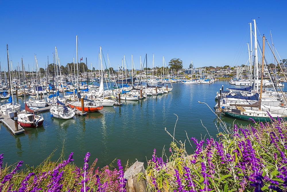 View of yachts at Santa Cruz Yacht Club, Santa Cruz, California, United States of America, North America