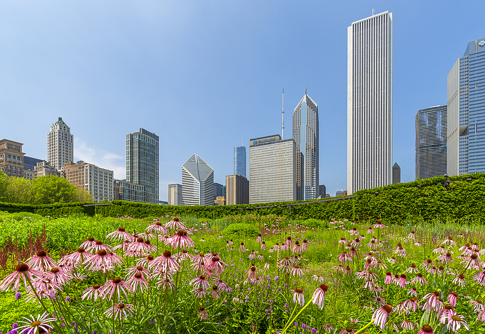 View of city skyscrapers from Millennium Park, Downtown Chicago, Illinois, United States of America, North America