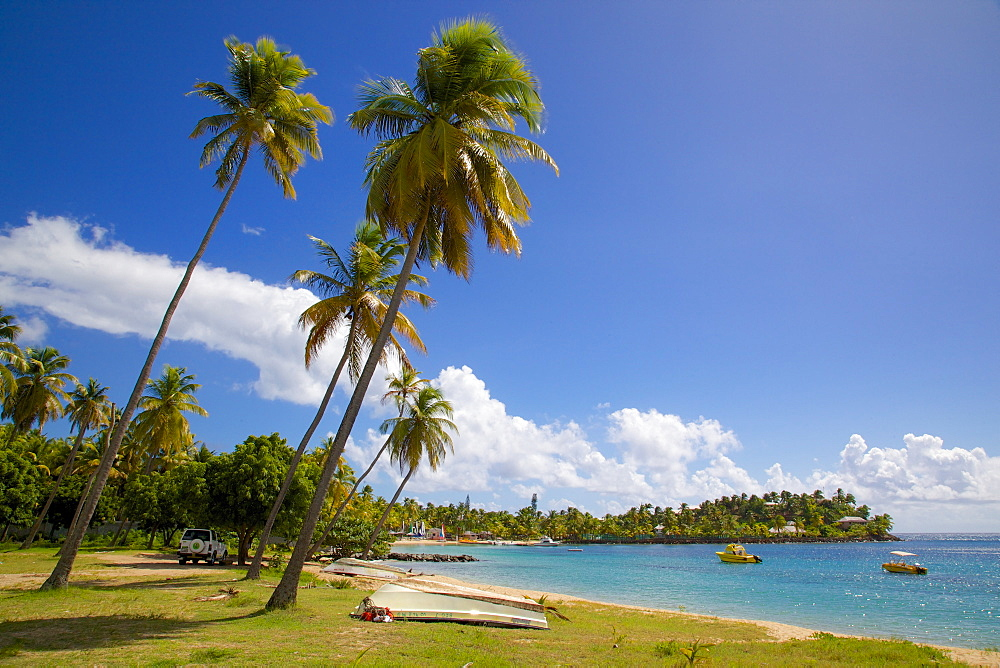 Palm trees and beach, Morris Bay, St. Mary, Antigua, Leeward Islands, West Indies, Caribbean, Central America