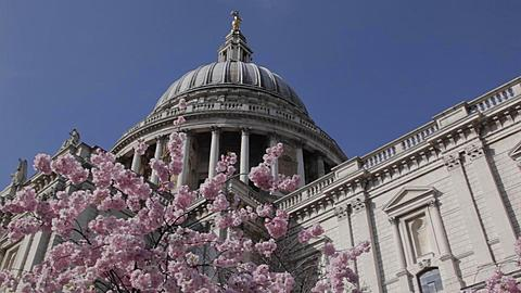 St Paul's Cathedral & Spring Blossom, London, England, UK, Europe