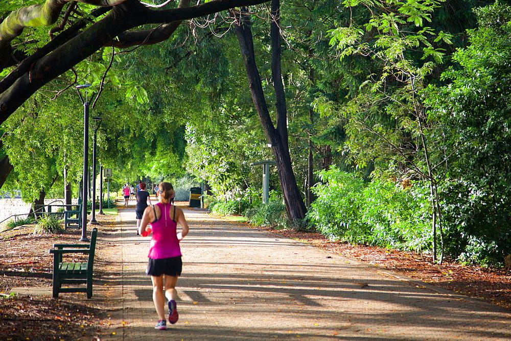 Botanical Gardens, Brisbane, Queensland, Australia, Oceania