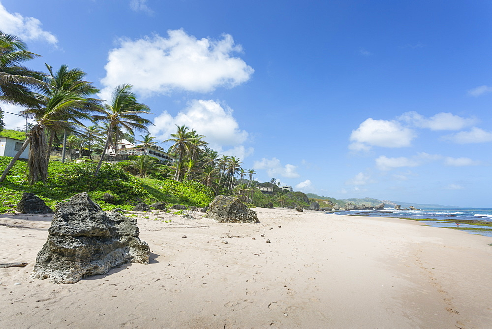 Bathsheba Beach, Bathsheba, St. Joseph, Barbados, West Indies, Caribbean, Central America