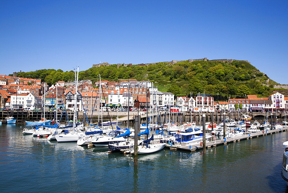 Yachts in the harbour and Castle Hill, Scarborough, North Yorkshire, Yorkshire, England, United Kingdom, Europe