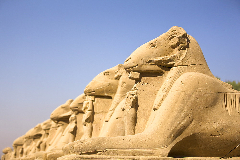 Ram headed sphinxes leading up to the first pylon at Karnak Temple, Karnak, Thebes, UNESCO World Heritage Site, Egypt, North Africa, Africa