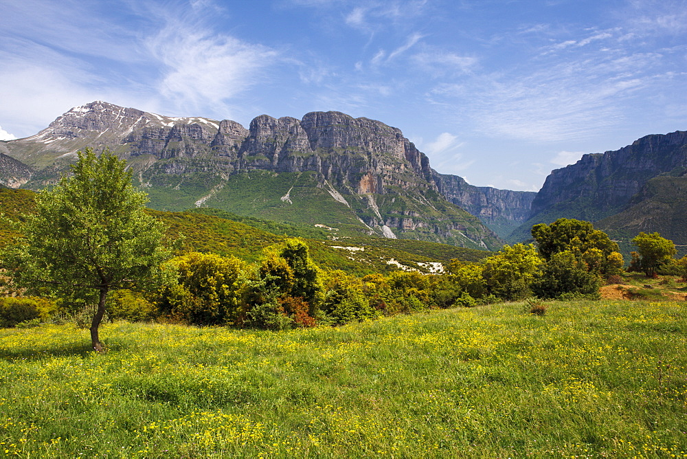 Wild flower meadow with the Astraka Towers and Vikos Gorge in the distance, Epirus, Greece, Europe
