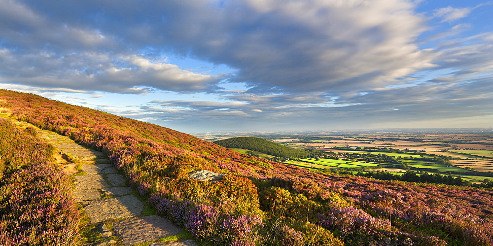 The heather clad Cleveland Way, Little Bonny Cliff and  Whorl Hill, North Yorkshire, Yorkshire, England, United Kingdom, Europe