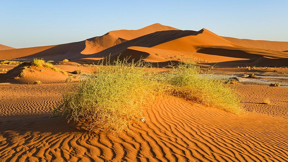 Evening light on the sand dunes at Sossusvlei, Namib Naukluft, Namibia, Africa