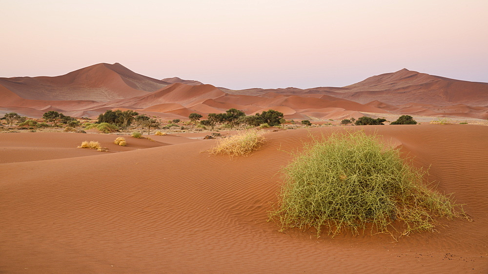 Soft pinks at dusk, Sossusvlei, Namib Naukluft, Namibia, Africa