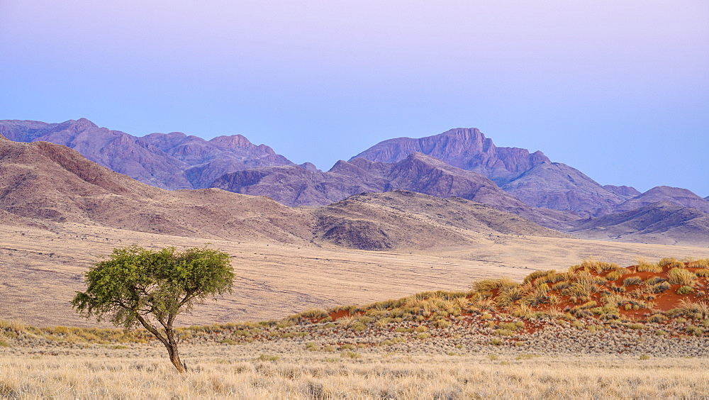 Acacia tree, dunes and mountains at dusk, NamibRand, Namib Desert, Namibia, Africa