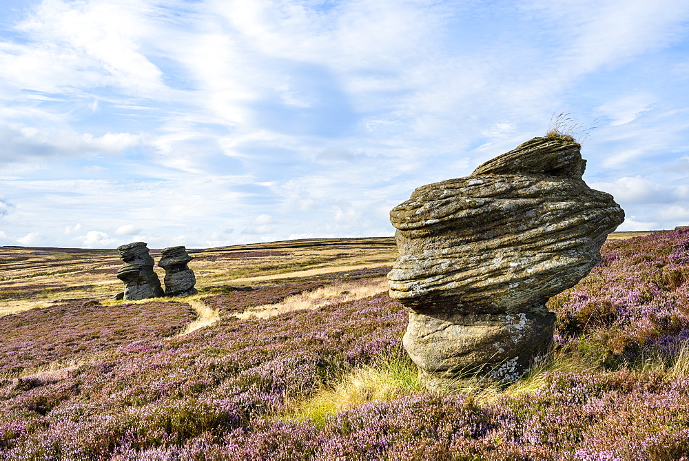 Jenny Twigg and her daughter Tib, gritstone formations on heather covered moors, Upper Nidderdale, North Yorkshire, Yorkshire, England, United Kingdom, Europe - 847-438