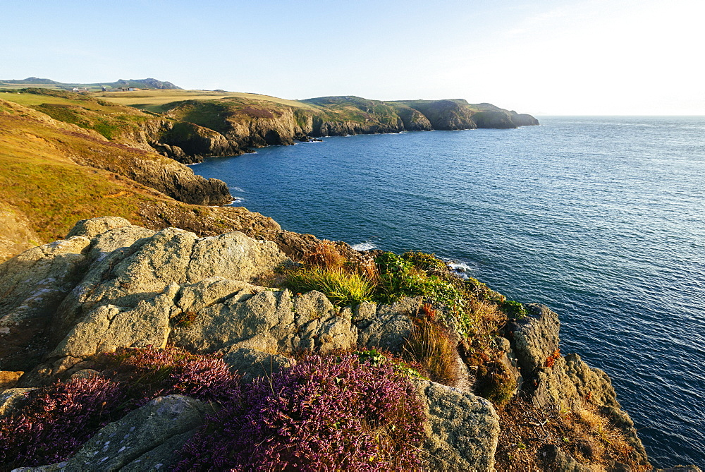 Strumble Head, Pembrokeshire Coast National Park, Wales, United Kingdom, Europe