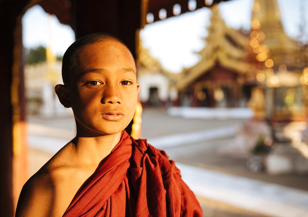 Young Buddhist monk, Bagan (Pagan), Mandalay Region, Myanmar (Burma), Asia
