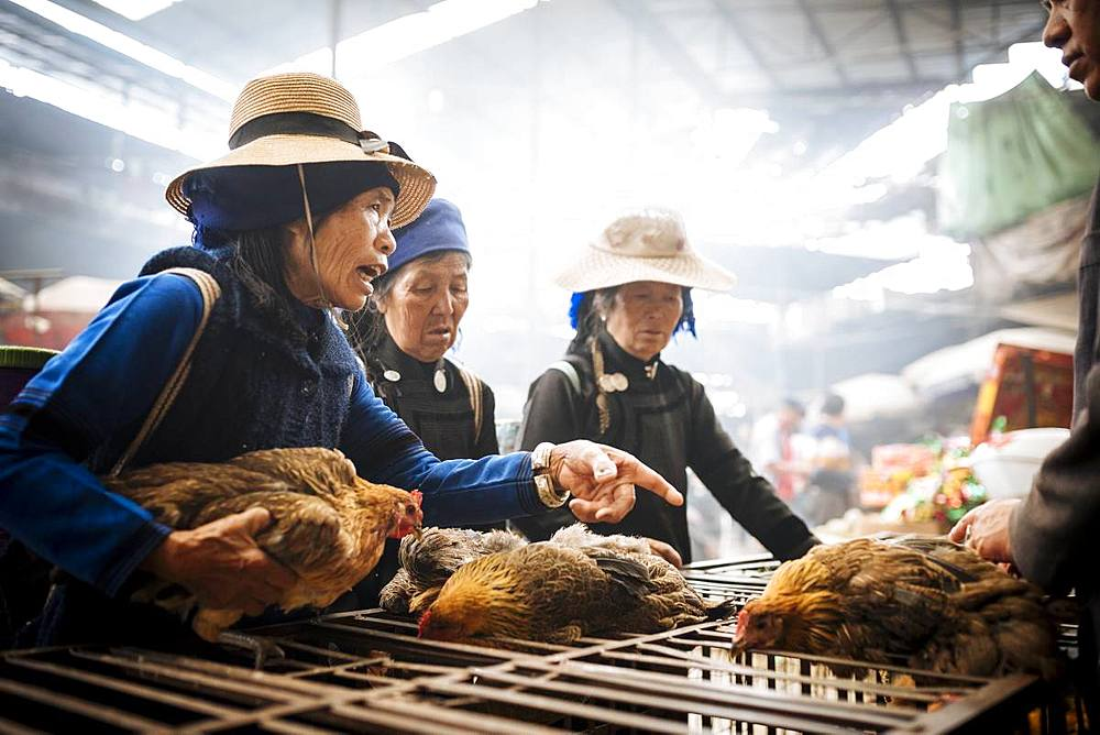 Women bartering over chicken sale at Xinjie Local Market, Yuanyang, Yunnan Province, China, Asia
