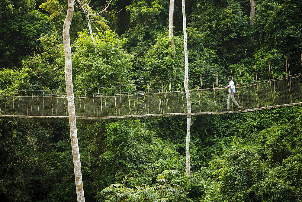 Man walking on Canopy Walkway through tropical rainforest in Kakum National Park, Ghana, Africa