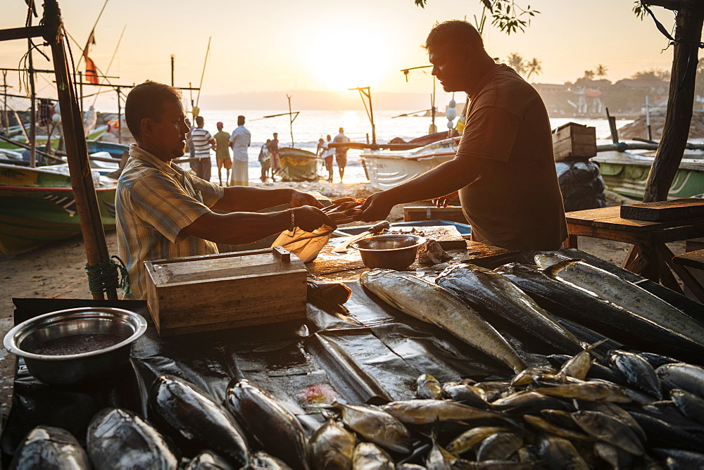 Fish market at dawn, Galle, South Coast, Sri Lanka, Asia