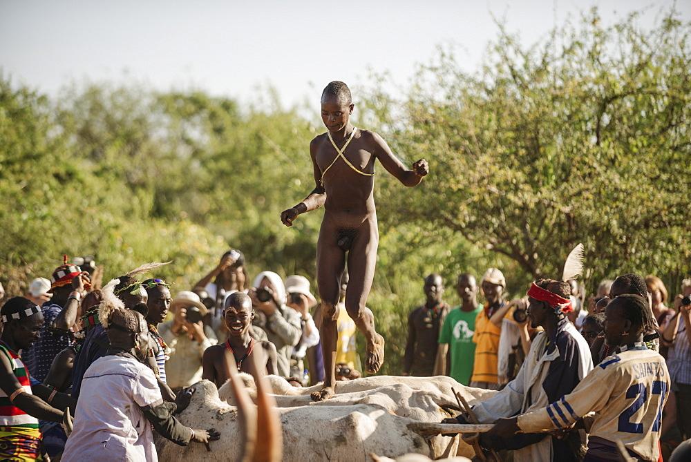 Jumping of the Bulls Ceremony, Hamar Tribe, Turmi, Omo Valley, Ethiopia, Africa