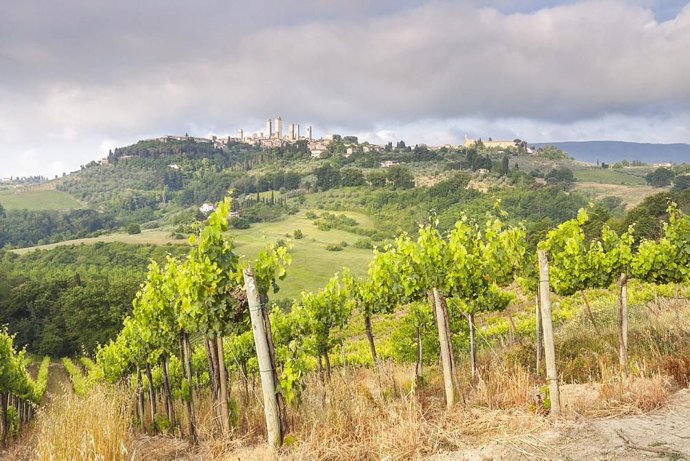 Vineyards near to San Gimignano, Tuscany, Italy, Europe