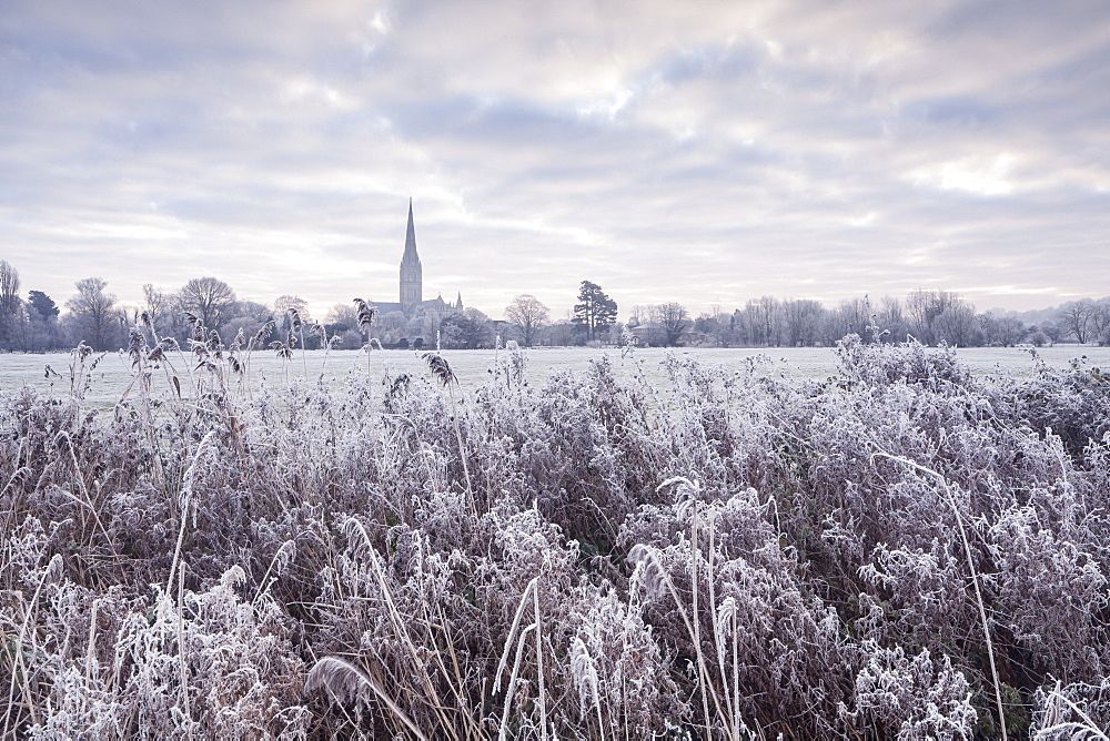 Salisbury Cathedral at dawn in winter, Salisbury, Wiltshire, England, United Kingdom, Europe