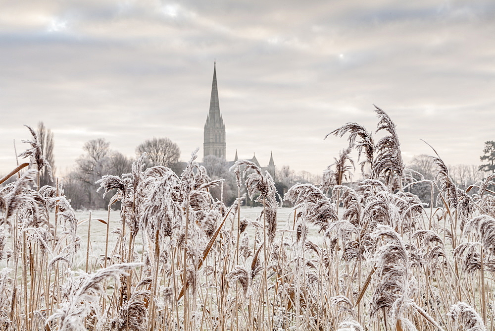 Salisbury athedral at dawn in winter, Salisbury, Wiltshire, England, United Kingdom, Europe