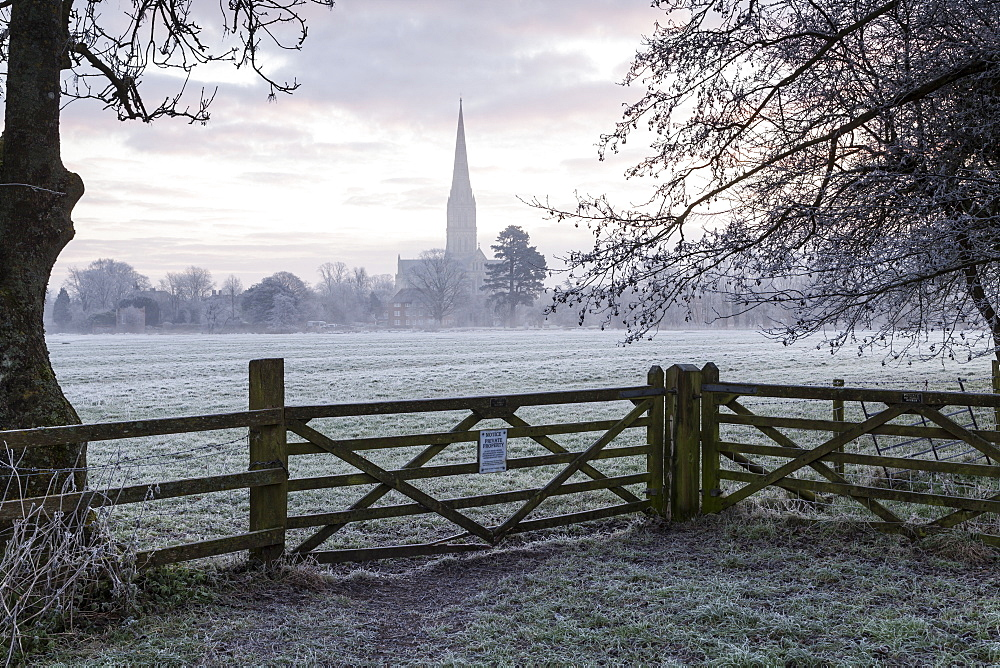 Salisbury Cathedral at dawn in Salisbury, Wiltshire, England, United Kingdom, Europe