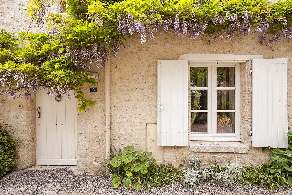 Wisteria in full bloom surrounds a door in Saint-Dye-sur-Loire, Loir-et-Cher, France, Europe