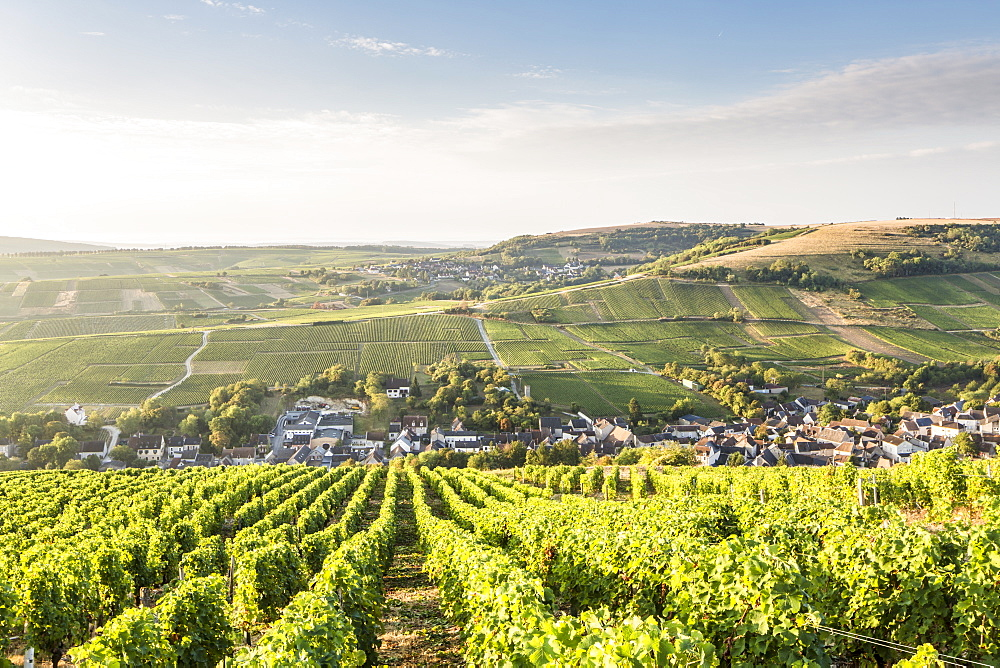 The vineyards of Sancerre above Chavignol, Cher, Centre, France, Europe - 849-1683