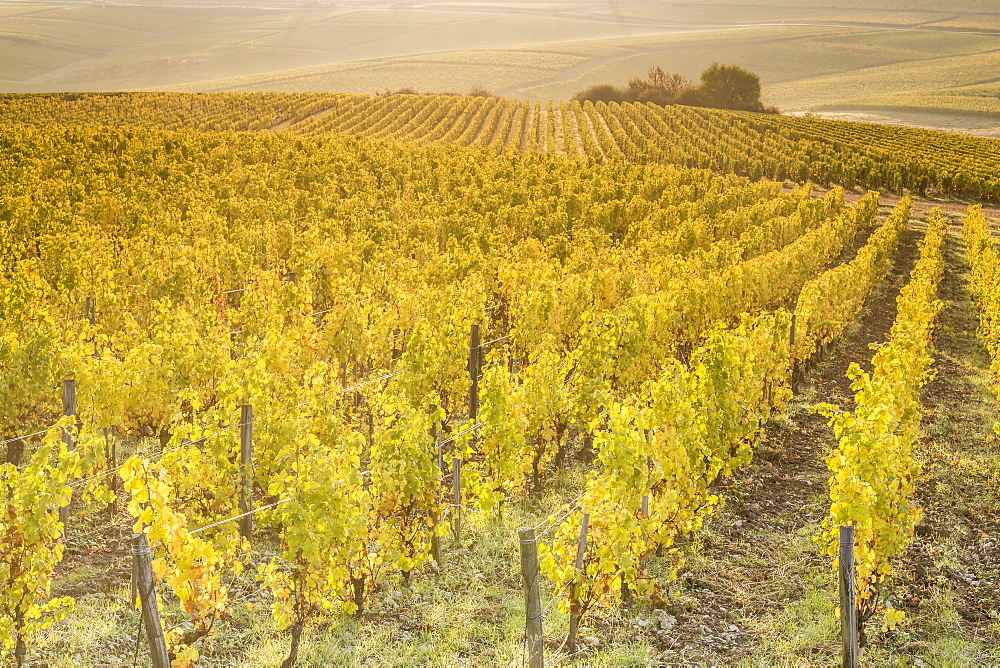 Dawn in the vineyards of Sancerre, Cher, Centre, France, Europe - 849-1692