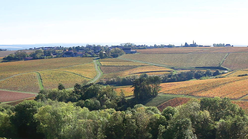 Autumn in the vineyards near to Chablis, Yonne, France - 849-1698