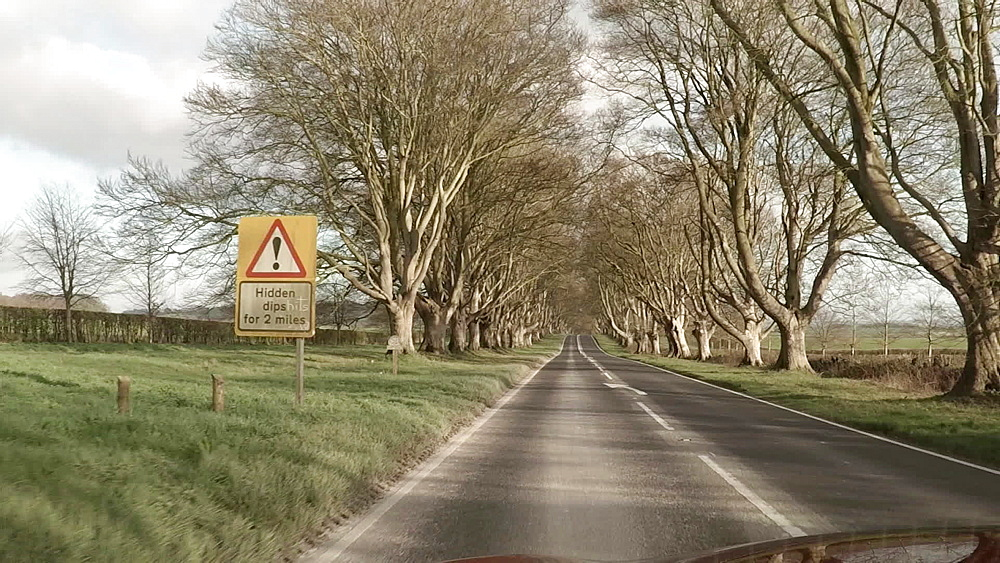 POV drive through Kingston Lacy beech avenue, Dorset, England, United Kingdom, Europe