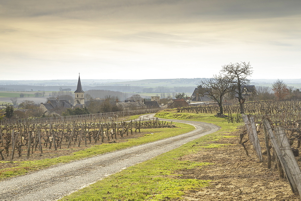 Winter in the vineyards of Berrie, France.