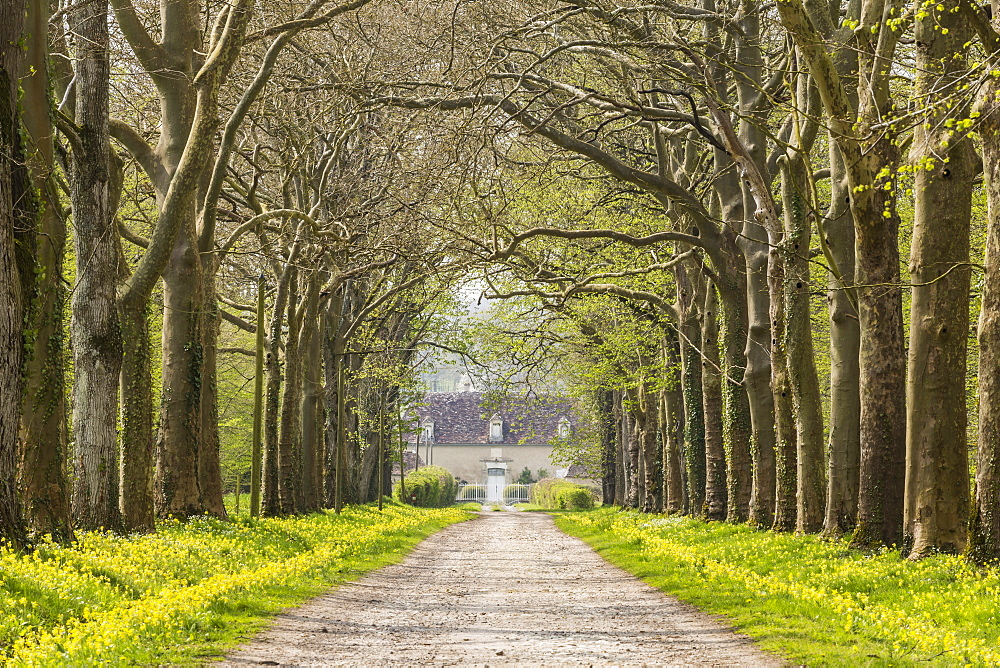 An avenue of trees in the countryside of Vienne, France, Europe - 849-1731