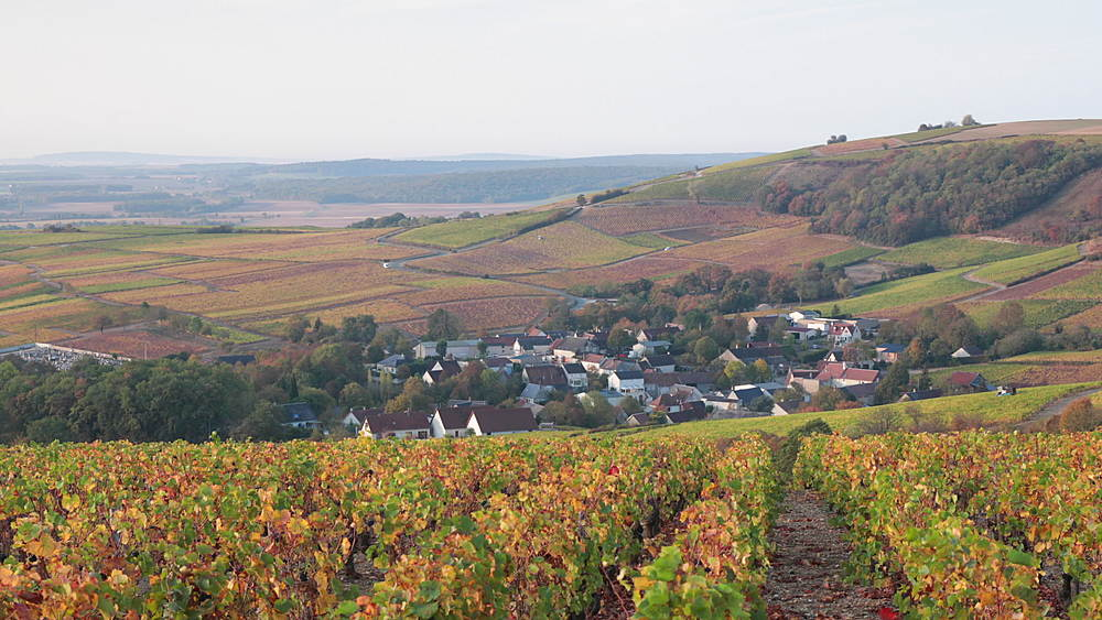 Autumn color in the vineyards of Sancerre, Cher, France, Europe - 849-1794