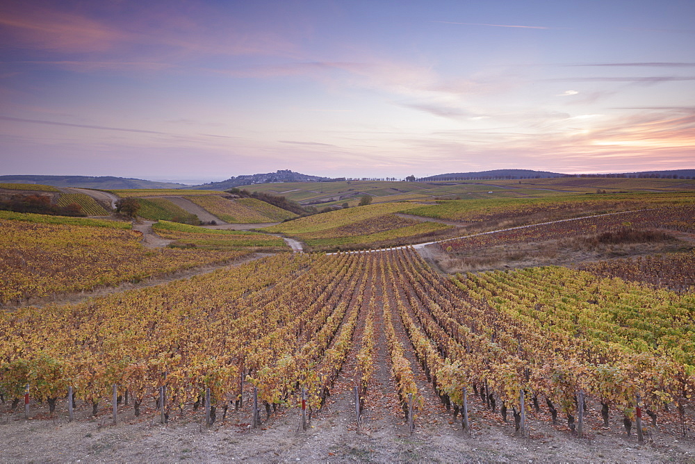 The vineyards of Sancerre, known for fine wines from grape varieties such as pinot noir and sauvignon blanc, Sancerre, Cher, Centre-Val de Loire, France, Europe