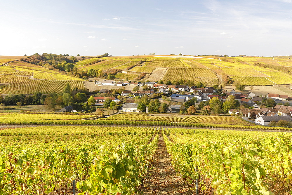 The vineyards of Sancerre, known for fine wines from grape varieties such as pinot noir and sauvignon blanc, Sancerre, Cher, Centre-Val de Loire, France, Europe - 849-1806