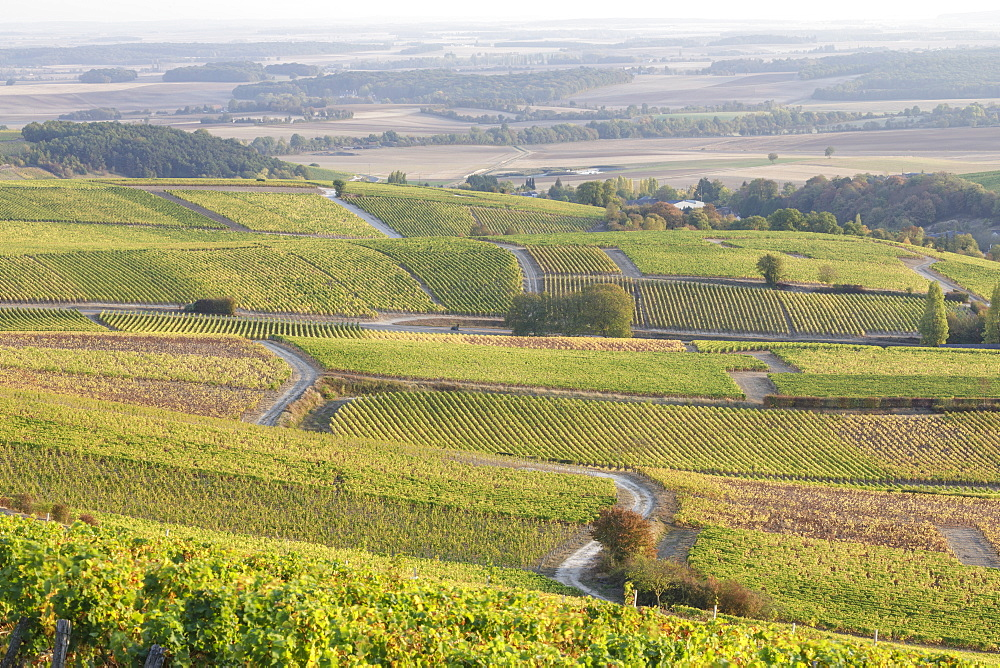 The vineyards of Sancerre, known for fine wines from grape varieties such as pinot noir and sauvignon blanc, Sancerre, Cher, Centre-Val de Loire, France, Europe - 849-1807
