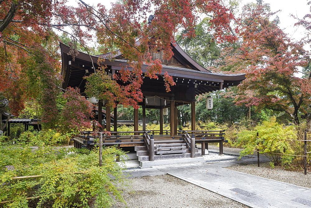 Autumn color in Nashinoki-Jinja Shrine in Kyoto, Japan.