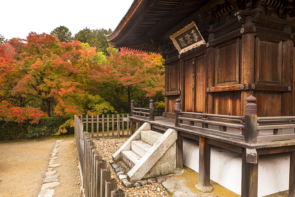 Autumn color in Jojakko-ji Temple in Arashiyama, Kyoto, Japan, Asia