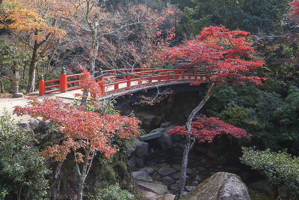Autumn colour, Miyajima, Hiroshima Prefecture, Japan, Asia