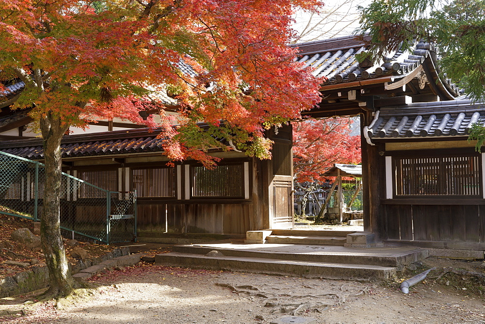 Autumn color around Daikoku-den Hall in Nara, Japan, Asia