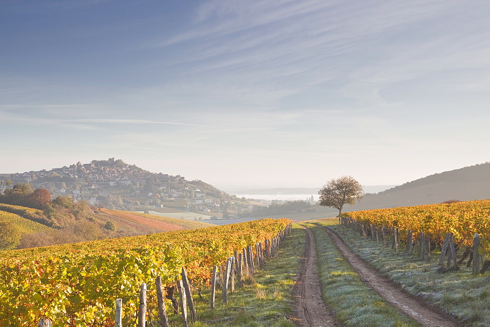 The vineyards of Sancerre draped in autumn colours, Cher, Centre, France, Europe