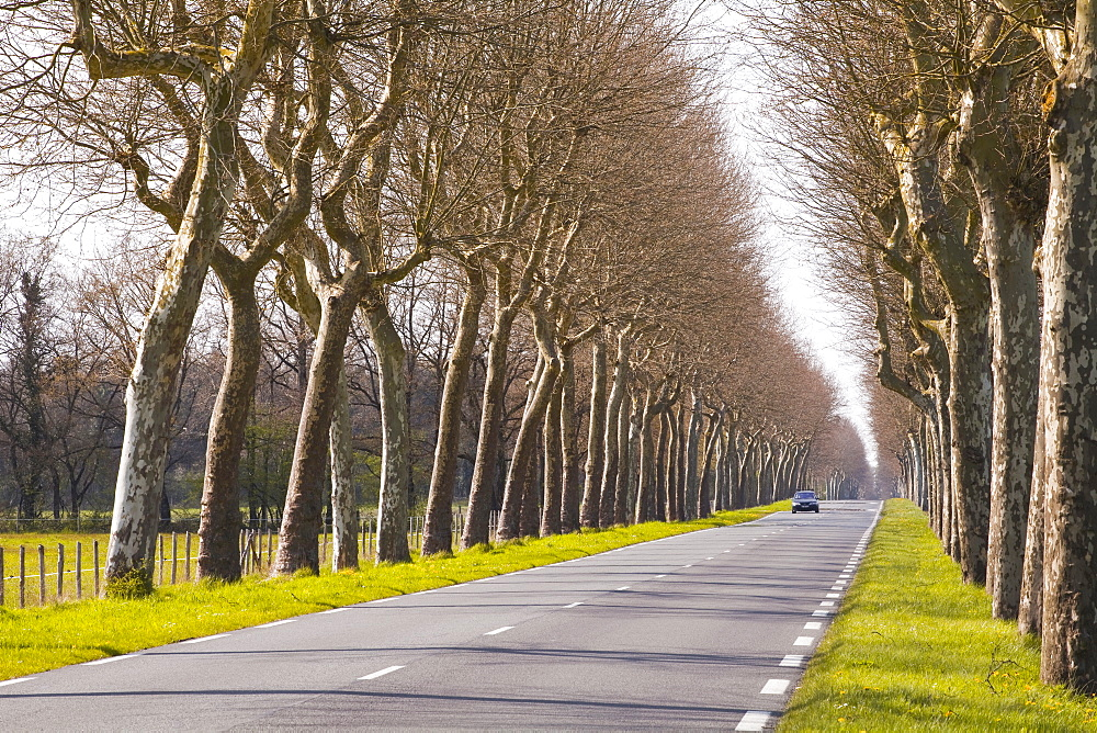 A tree lined road in the Sarthe area, Pays de la Loire, France, Europe