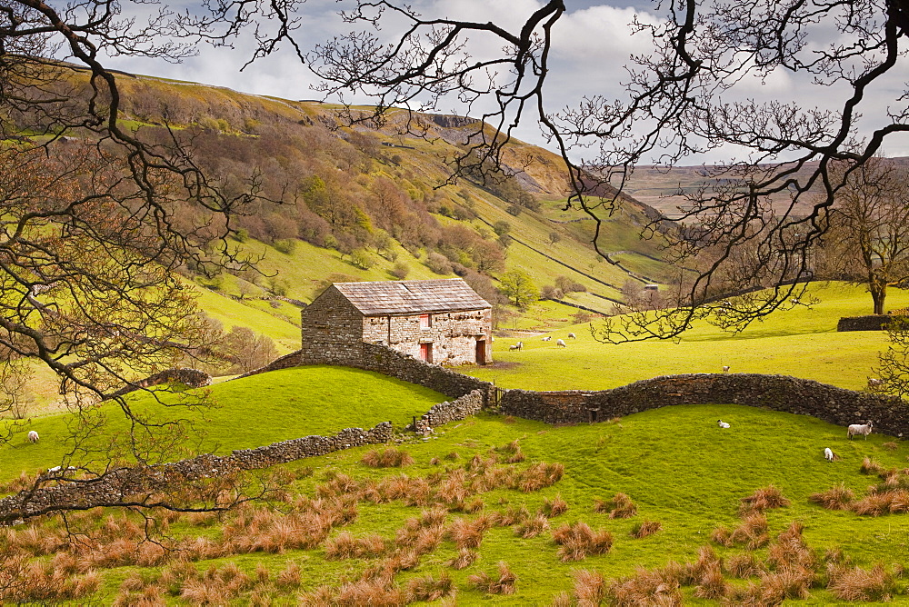 Stone barn in the Swaledale area of the Yorkshire Dales National Park, Yorkshire, England, United Kingdom, Europe