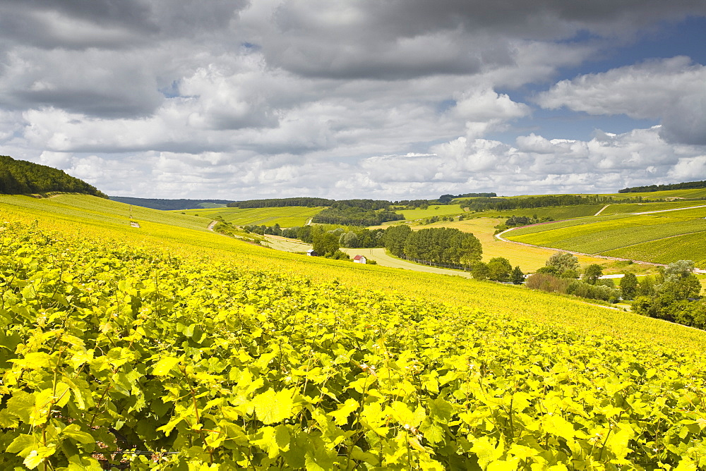 Champagne vineyards above the village of Viviers sur Artaut in the Cote des Bar area of the Aube department, Champagne-Ardennes, France, Europe