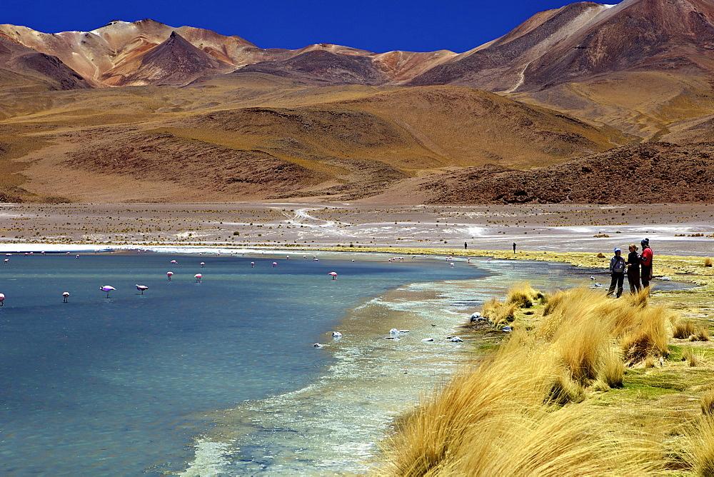Laguna Canapa, South Lipez, Southwest Highlands, Bolivia, South America - 851-165