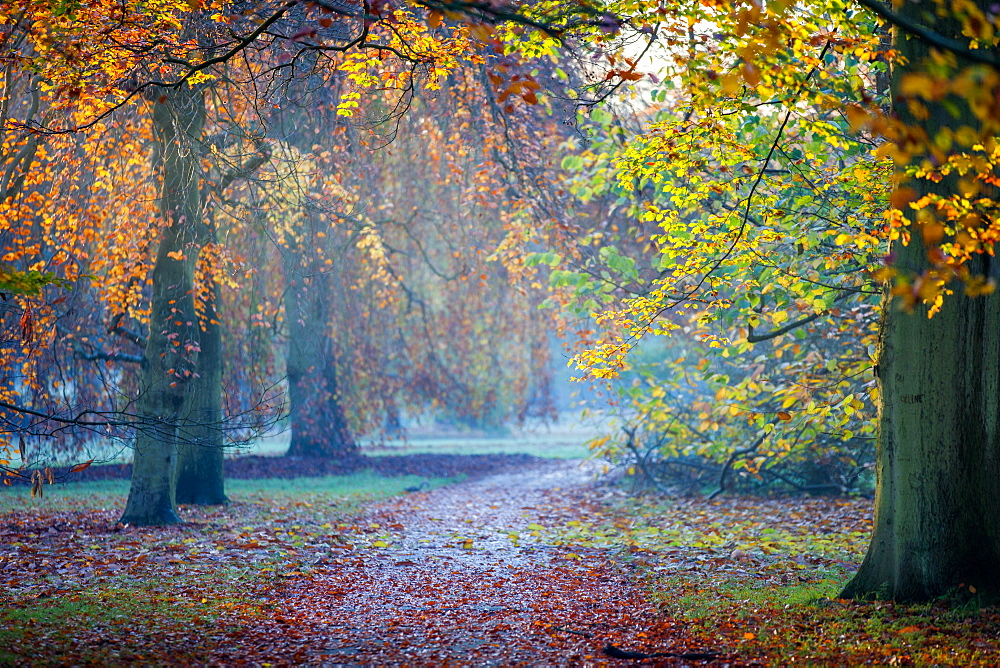 Autumn in Kew Gardens, UNESCO World Heritage Site, Kew, Greater London, England, United Kingdom, Europe - 851-632