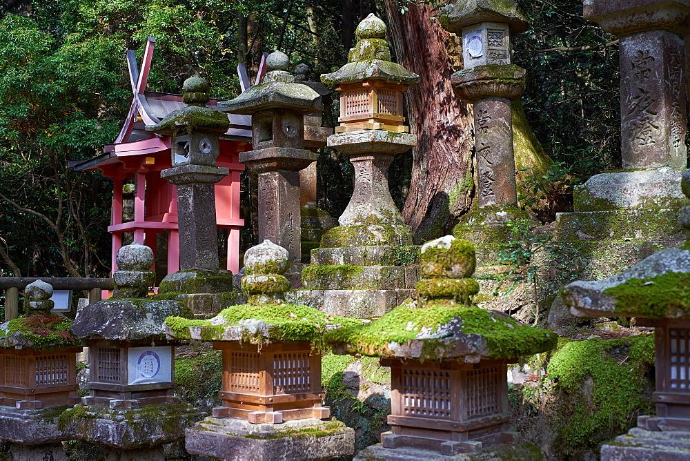 Stone lanterns at Kasuga Wakamiya Shrine in Nara Park, Nara, Japan, Honshu, Japan, Asia - 851-703
