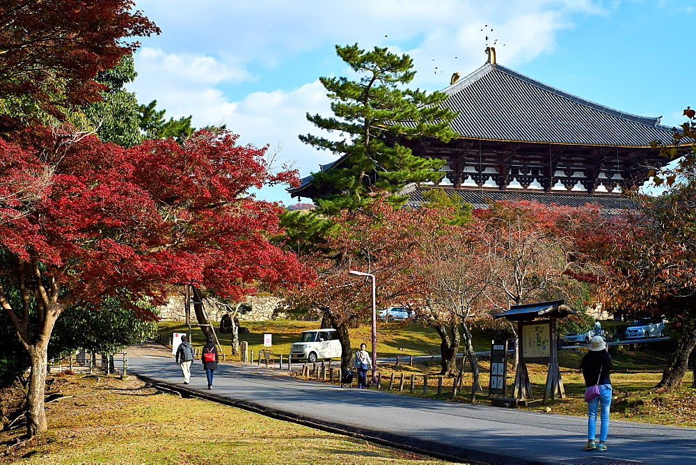 Nara Park in autumn with Todaiji Temple in the background, Nara, Japan, Asia