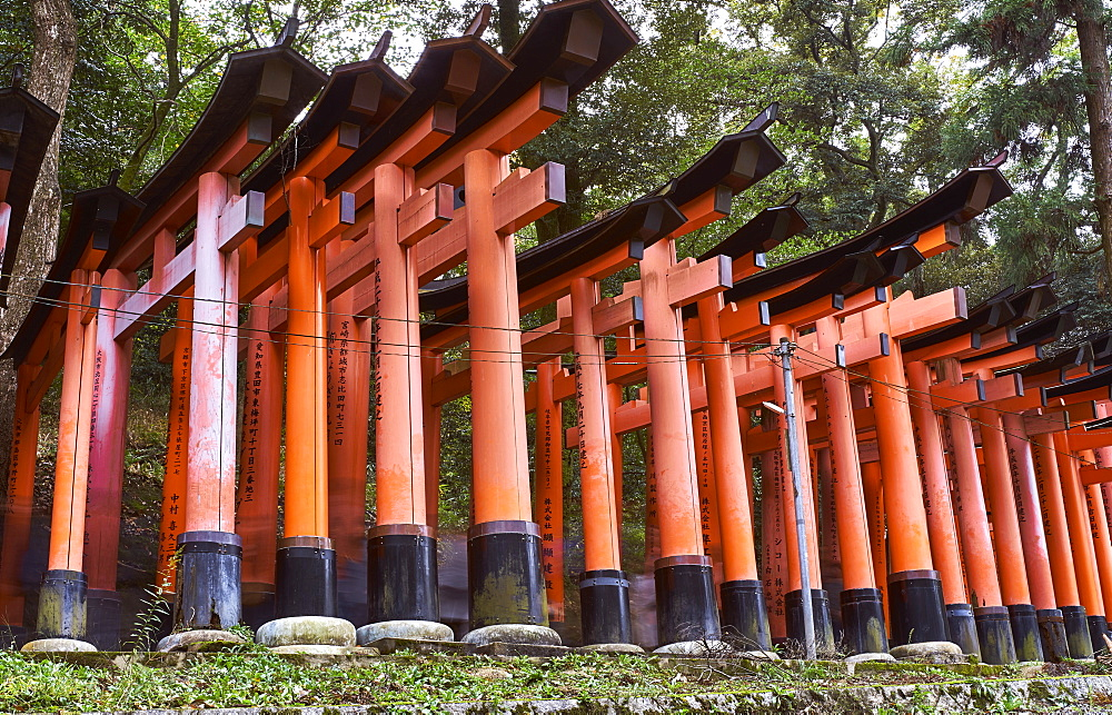 Red wooden Torii Gates at Fushimi Inari Shrine, Kyoto, Japan, Asia