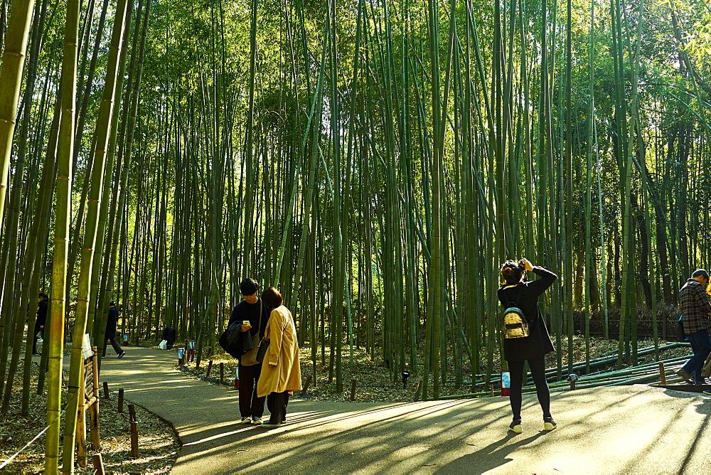 Sagano Bamboo Forest in Arashiyama, Kyoto, Japan, Asia